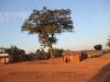Tree and huts